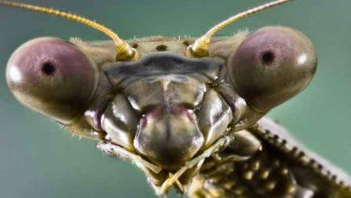 ترس از حشره یا آنتوموفوبیا