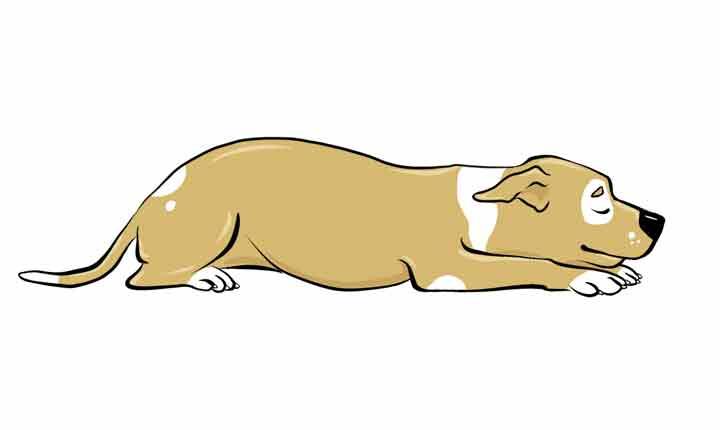 تعبیر خواب سگ از نظر یونگ و دیگر معبران