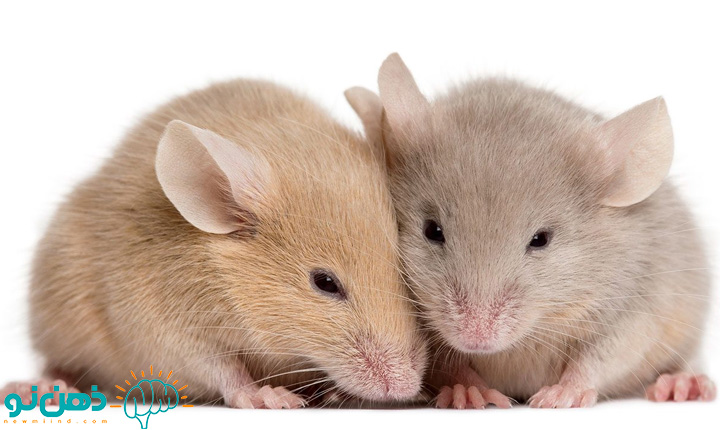 تعبیر خواب موش و یا گرفتن موش چیست