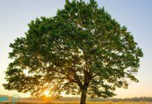 تعبیر خواب درخت چیست